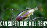 Can Super Glue Kill Fish? : An Investigative Result