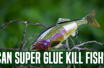 Can Super Glue Kill Fish? : An Investigative Result