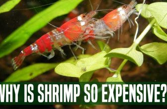 Why Is Shrimp So Expensive?